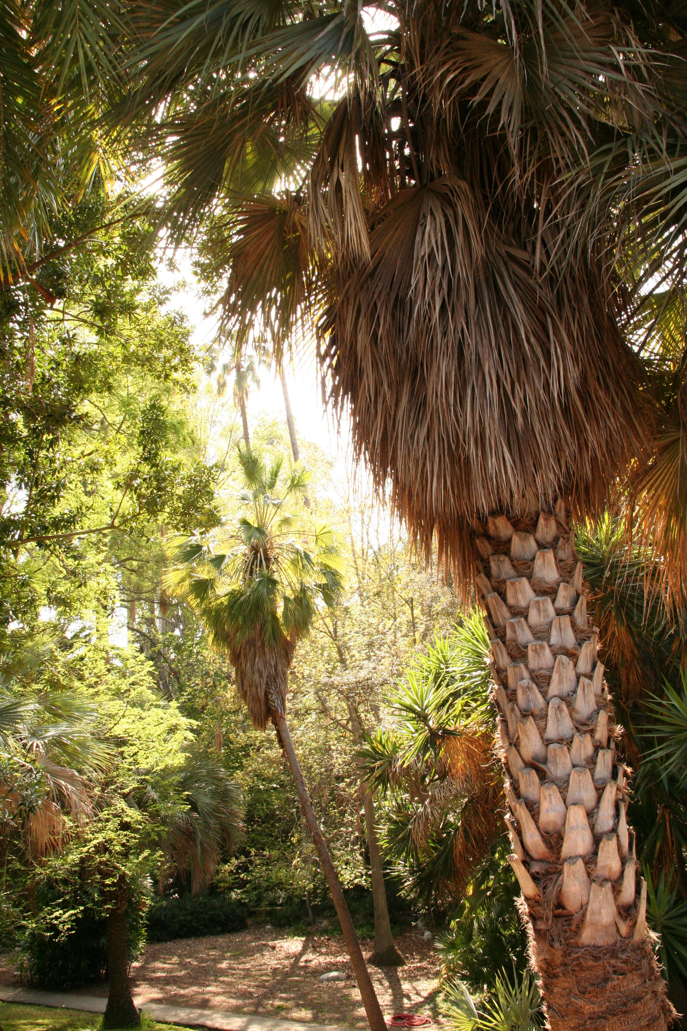 Ucla Mildred E Mathias Botanical Gardens Photo Credit Ucla