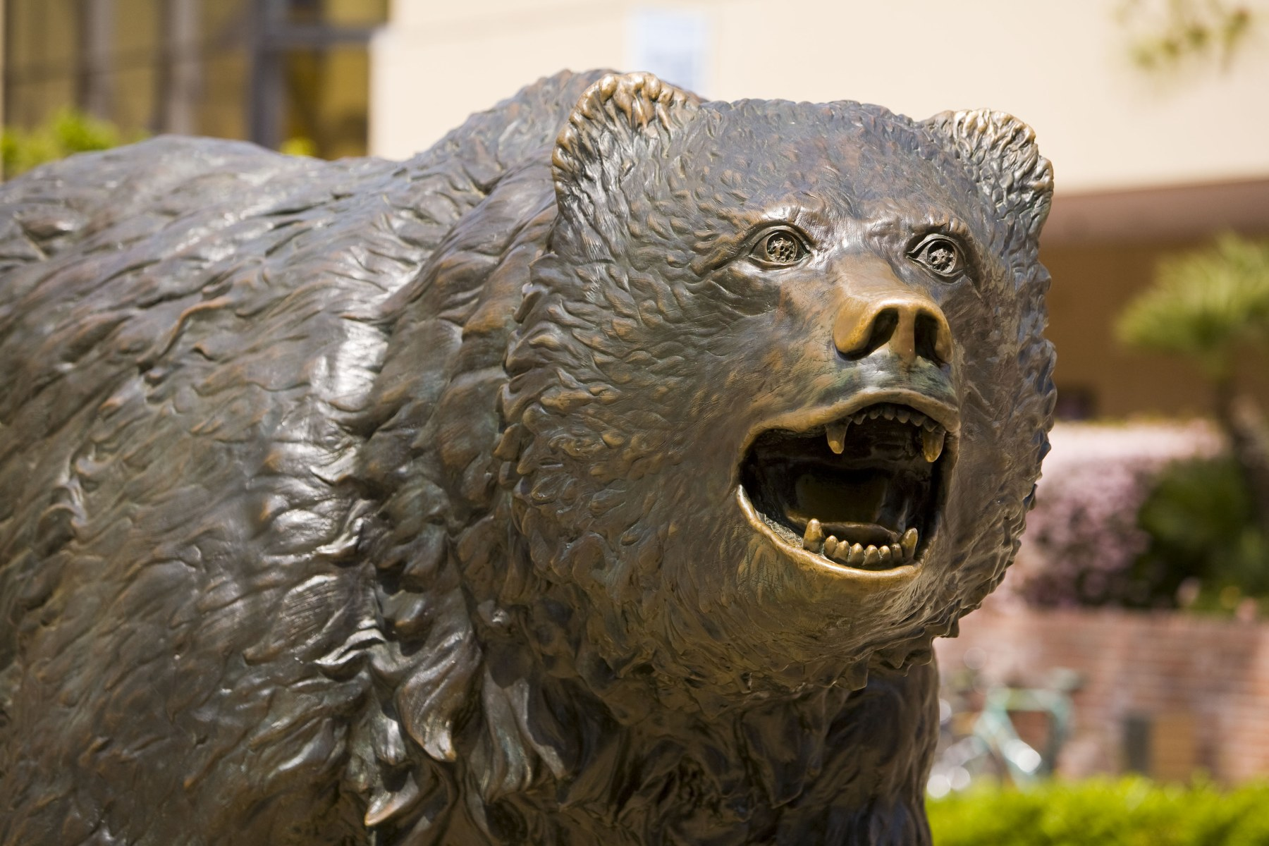 Image Result For Bruins