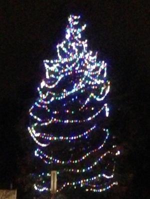 Christmas Tree---Photo Credit: Deborah Wong