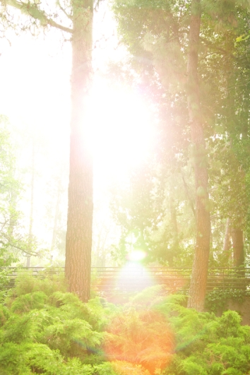 Mildred Mathias Botanical Garden --- Photo Credit: © 2012 Kyle Alexander